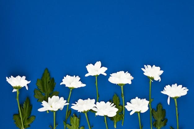 花のフレーム。青色の背景に白い花のレイアウト。自然の美の概念
