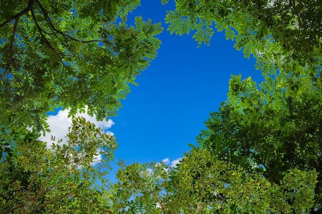 푸른 하늘 자연 배경에 녹색 나뭇 가지의 프레임