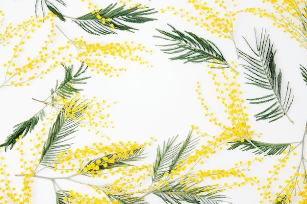 흰색 바탕에 미모사 꽃의 프레임입니다. 평평한 평지, 평면도. 봄 개념