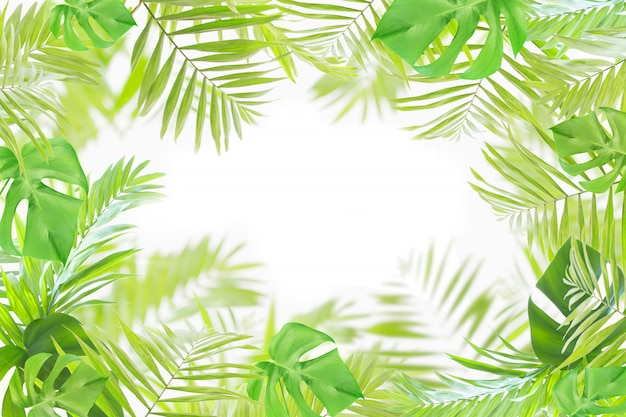 ヤシとモンステラの葉の白い背景で隔離のフレーム