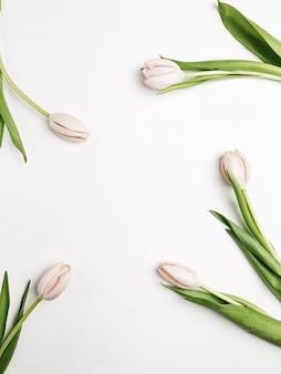 白地にピンクのチューリップの花のフレーム。フラットレイ、トップビュー