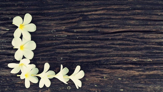 木の上にplumeriaの花のフレーム