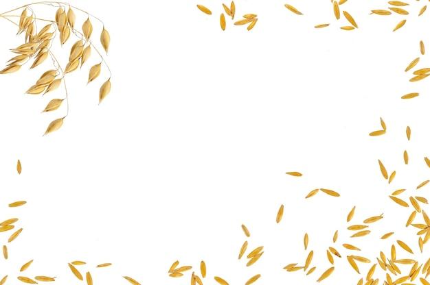 白い背景で隔離のオーツ麦と豆の3本の茎のフレーム