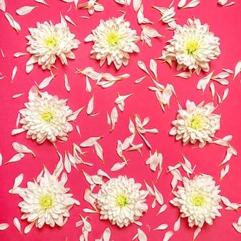 Рамка из белых цветов и лепестков хризантемы на розовом пастельном фоне.