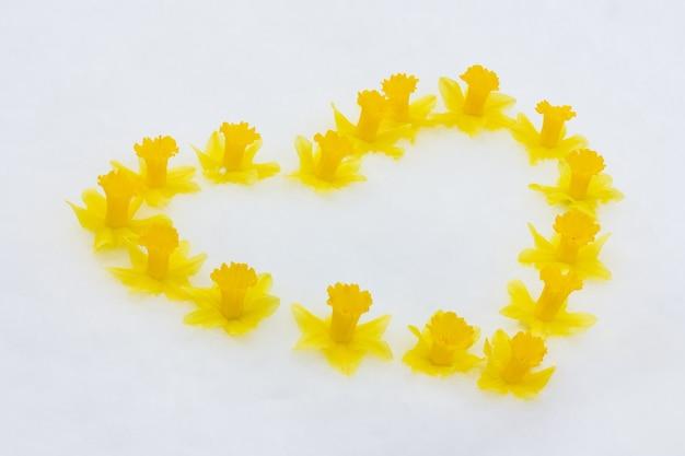 白い雪の上のハートの形をした黄色い水仙の花のつぼみのフレーム
