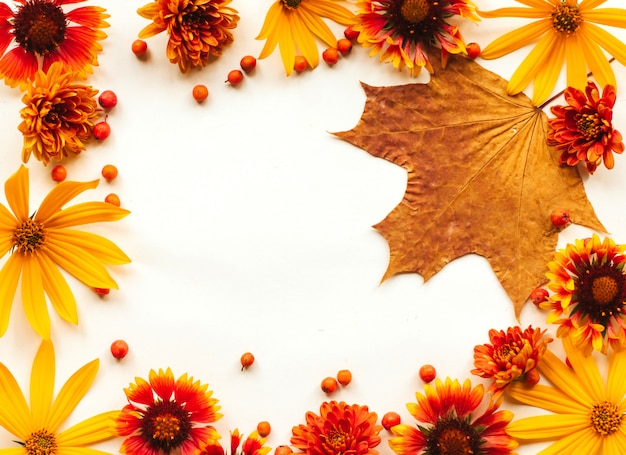 Frame of orange, yellow and red autumn flowers and rowan berries and maple leaf on a white background