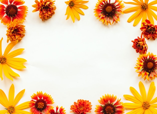 Frame of orange, yellow and red autumn flowers on a white background with copyspace