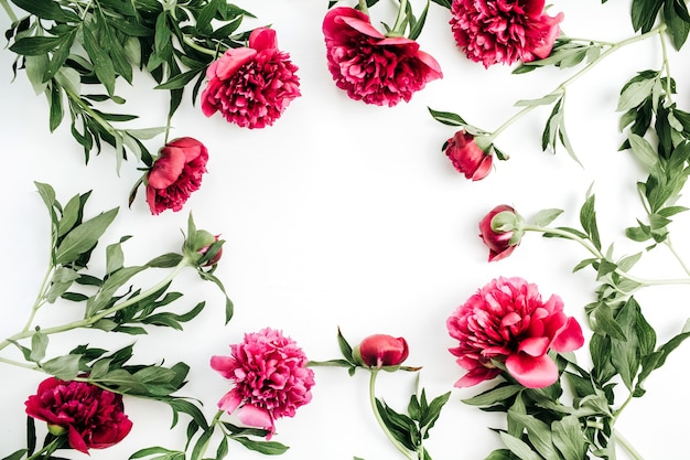 Frame of pink peony flowers on white background. flat lay, top view