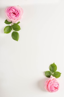 Frame of pink peony and leaves on white background