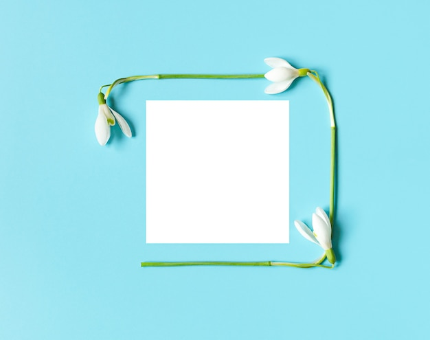 Frame on postcard of snowdrops with white paper for womens day or mothers day on blue background