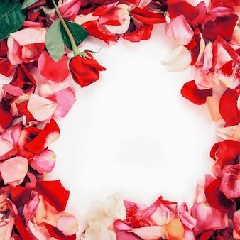 Frame of rose petals on white background