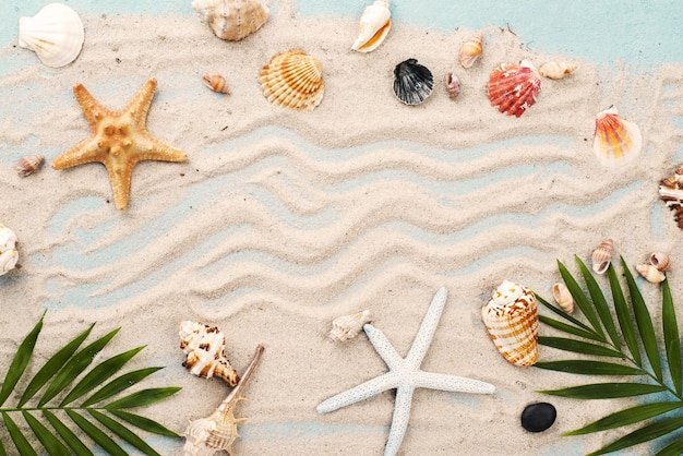 Cornice di conchiglie e stelle marine