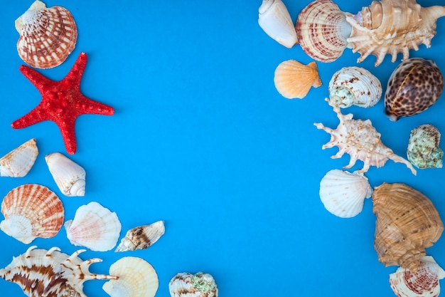 Frame of shells of various  size and red starfish on a blue background.