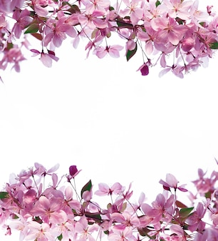Frame of spring flowers and space for text