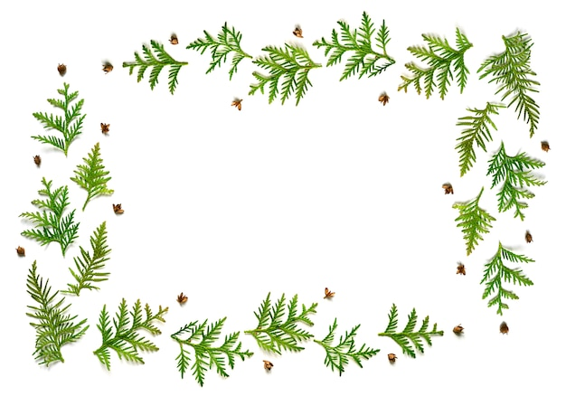 Frame of twigs of thuja and tiny cones isolated on a white background.