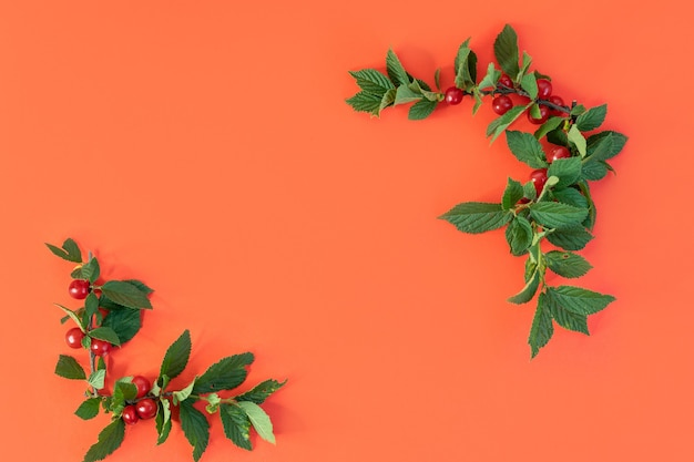 The frame of twigs with leaves and cherries on a red background the empty place with copy space