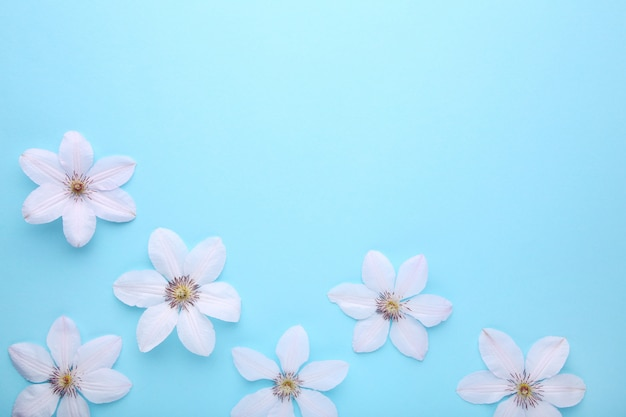 Frame of white flowers on blue, flat lay