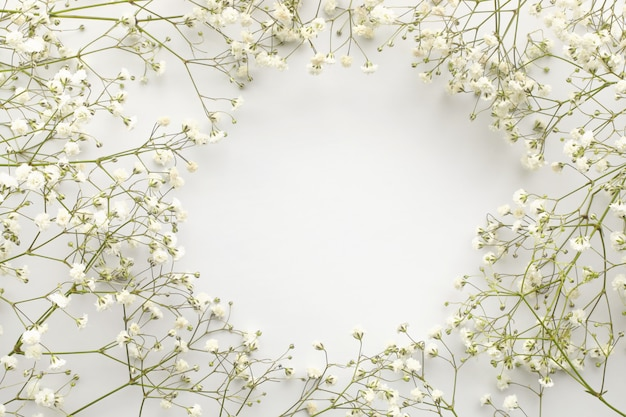 Frame of white flowers, gypsophila. flat lay composition. white background. top view. copy space.