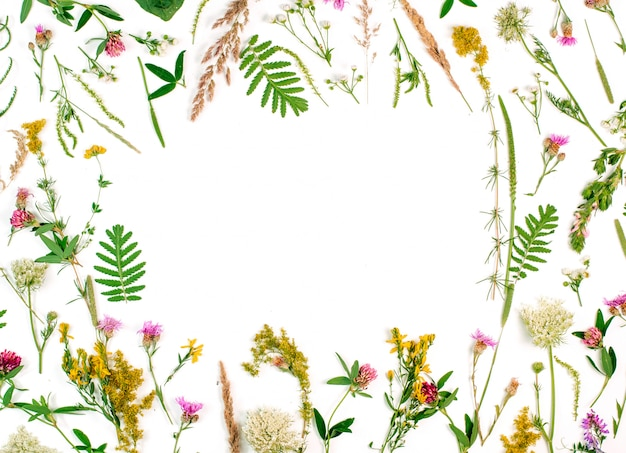 Frame of wildflowers and leaves on white background