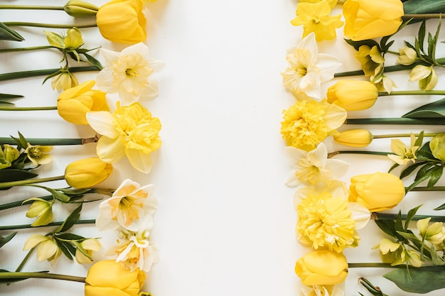 Рама с пустой копией пространства из желтых нарциссов и тюльпанов на белом. плоская планировка, вид сверху цветочная концепция праздничного праздника