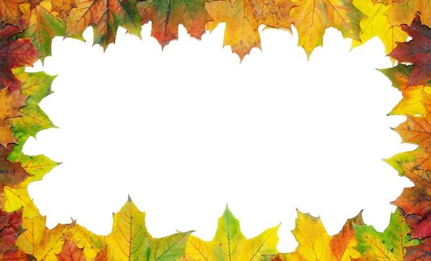色付きの秋のカエデの葉のフレーム-白い背景