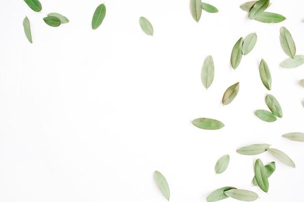 白い背景で隔離の緑の花びらとフレーム。