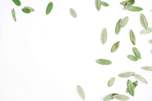 Frame with green petals isolated on white background.