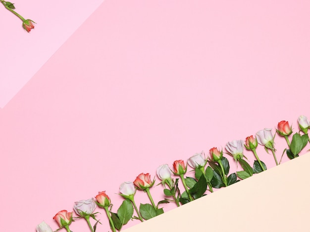 Frame with roses. pink & white roses. holiday pink background