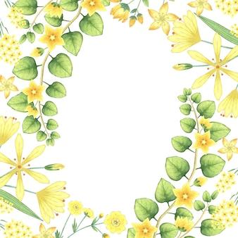 수채화 노란색 꽃과 허브와 프레임입니다.