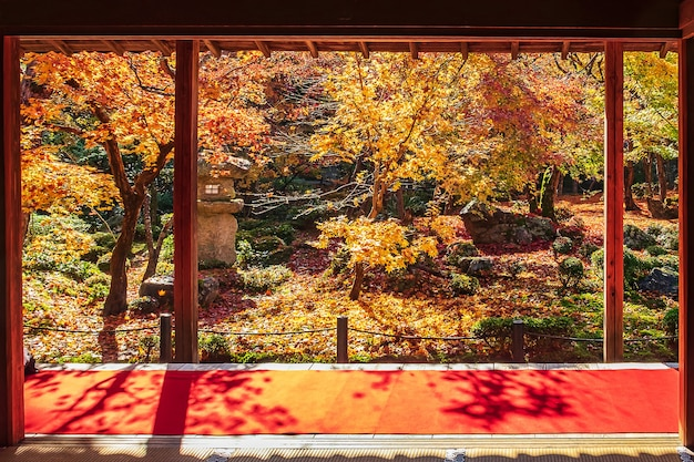 Frame between wooden pavilion and beautiful maple tree in japanese garden and red carpet at enkoji temple, kyoto, japan. landmark and famous in autumn season
