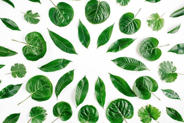흰색 표면에 녹색 잎의 프레임 화 환