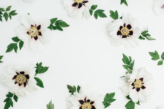 Frame wreath of white peony flowers on white background. flat lay, top view