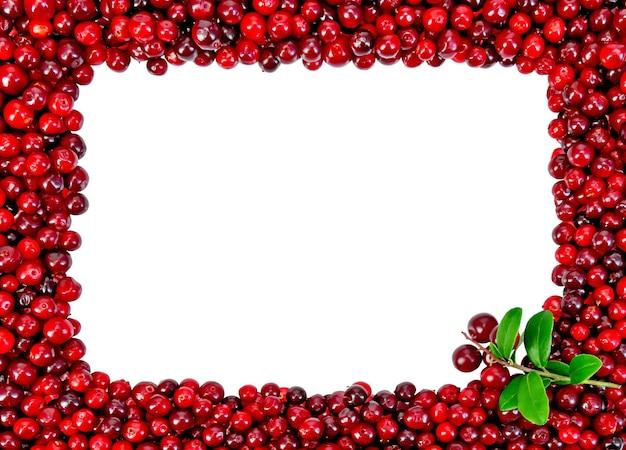고립 된 무늬와 foxberry에서 액자