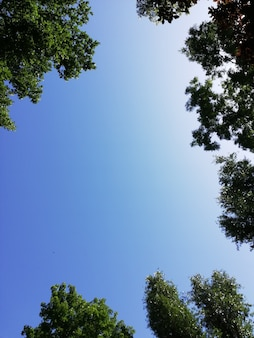 Framed shot of a clear blue sky surrounded by tree branches