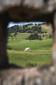 Framed shot of a white horse in a rolling pasture