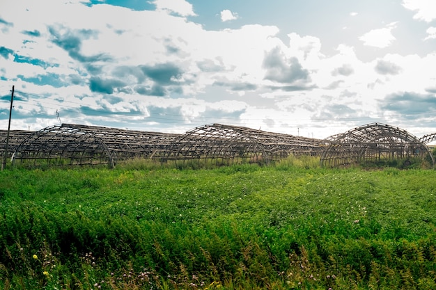 Frames of abandoned agricultural greenhouses among thickets, decline of agriculture