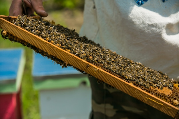 Frames of a bee hive. frame with honeycombs with honey in the beekeeper's hands on an apiary