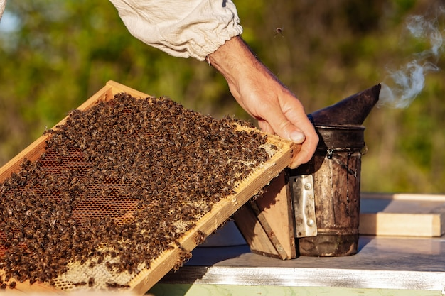Рамки пчелиного улья. пчеловод собирает мед. рабочие пчелы на медовых ячейках. концепция пасеки.