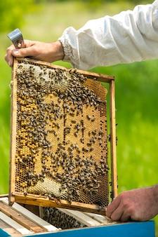 Рамки пчелиного улья. рука пчеловода работает с пчелами и ульями на пасеке.