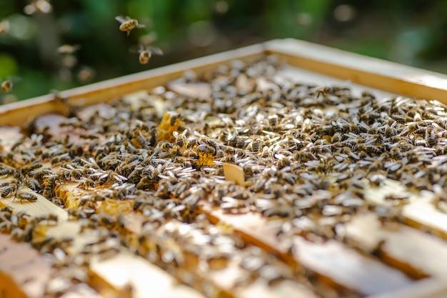 蜂の巣のフレーム。ミツバチが住むフレームを示す、開いたハイブ本体のクローズアップビュー。