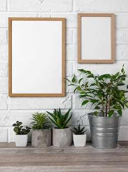 Frames on wall and flower pots