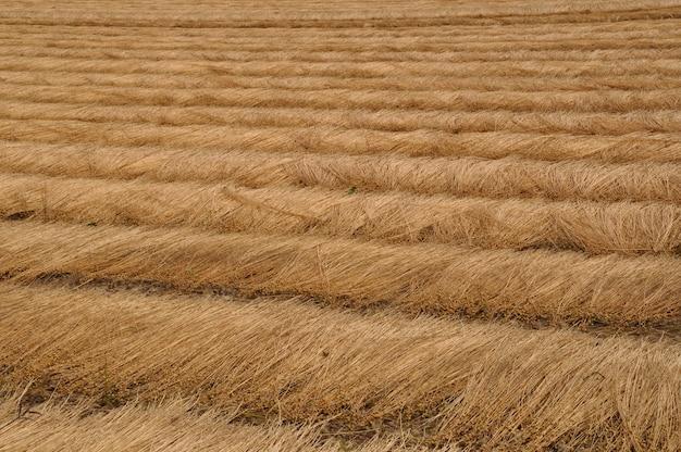 フランス、ノルマンディーのリネン畑