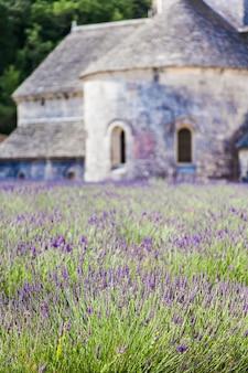 프랑스, 프로방스 지역, 세낭크 수도원. 여름 시즌에 라벤더 필드입니다.