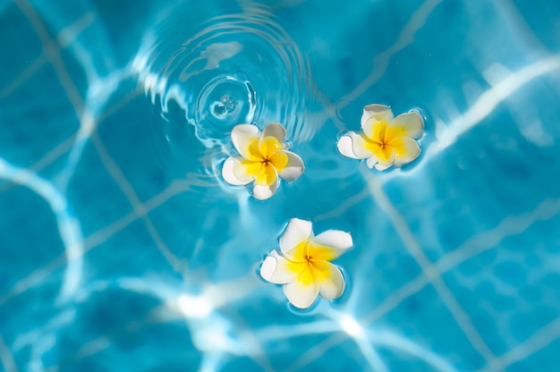 Frangipani flower on the blue water