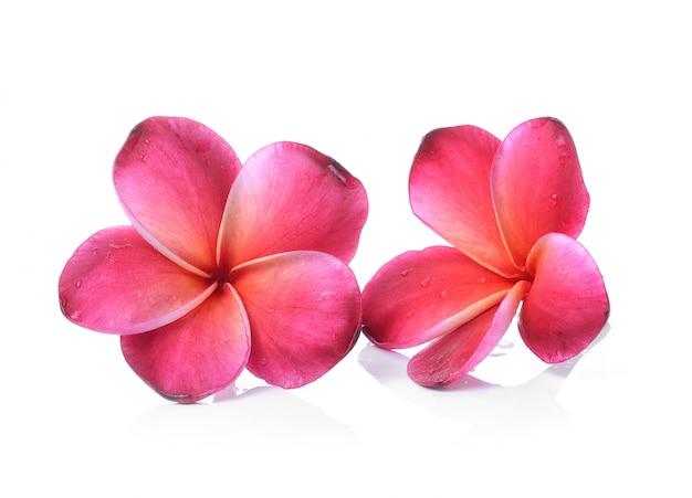 Цветок frangipani изолированный белый фон