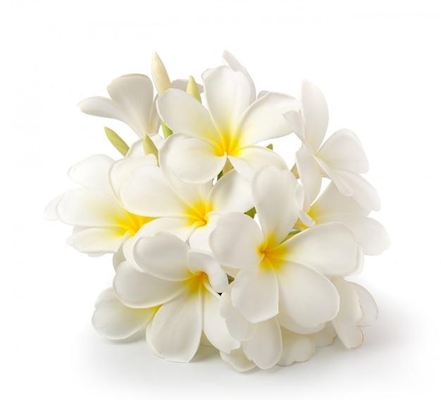 Цветок frangipani изолированный на белизне на белизне