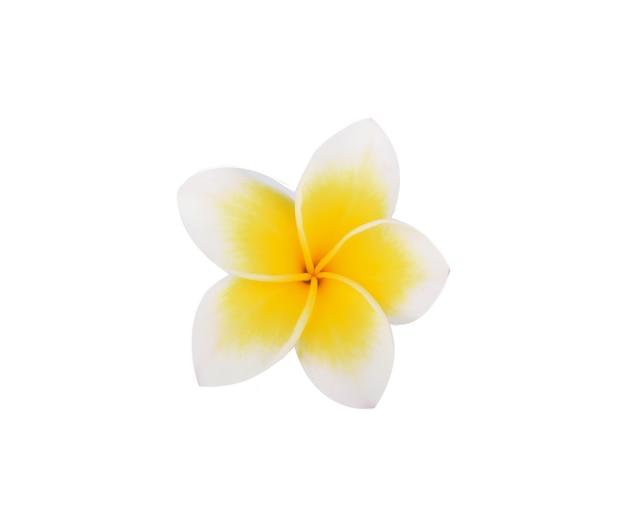 白い表面に分離されたフランジパニの花