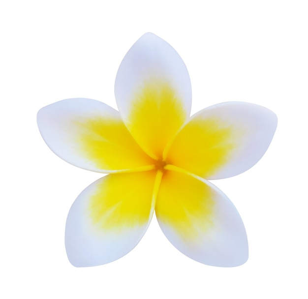 白で隔離プルメリアの花