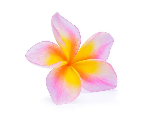 Цветок франжипани, изолированные на белом фоне
