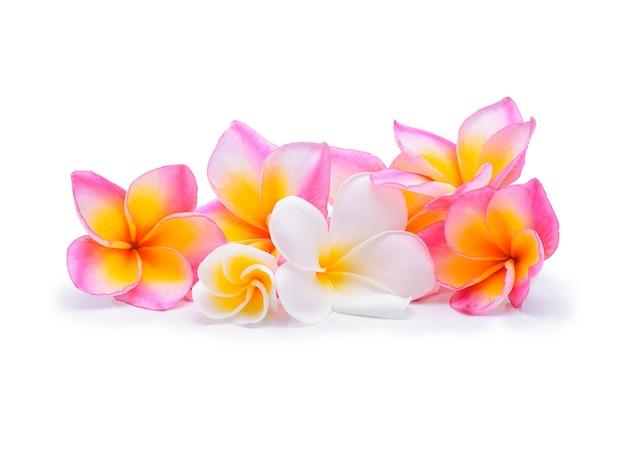 Цветок франжипани изолированный белый.